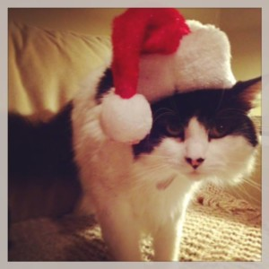 Merry Christmas and Happy Holidays 2013 from Beethoven!