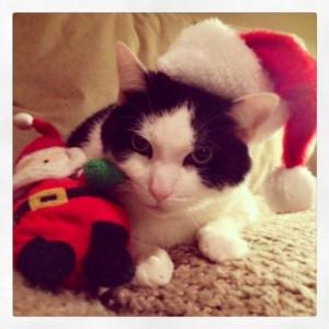 """Merry Christmas, Oreo! I think he is saying """"Bah Humbug!"""" to me. :)"""