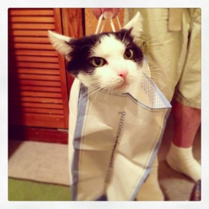 The Cat's in the Bag!