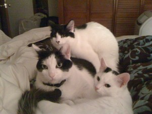 Oreo makes sure new siblings Beethoven and Charlotte are snug and warm before bed!