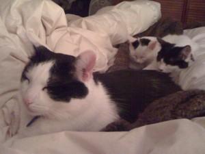 "Oreo and his faithful ""Minions"" Beethoven & Charlotte!"