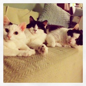 Today, Oreo, Beethoven and Charlotte are inseparable!