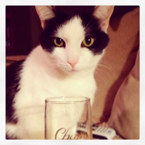 """Here's to the World's Most Interesting Cat - Oreo! Happy April 15th """"Gotcha"""" Day Birthday! :)"""