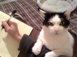 Oreo is NOT happy with how this story of mine ended...