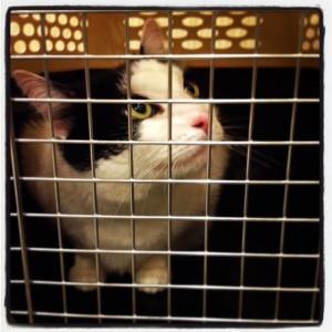 Oreo just LOVES visiting http://www.thepetsvet.com!
