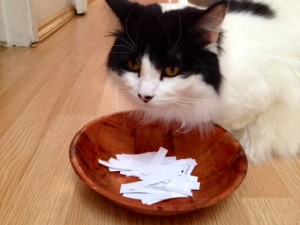 Beethoven also examines the bowl of names to make sure no corruption or bribery of tuna affected the outcome of our annual 2014 NAPIBOWRIWEE door prize random drawing contest...