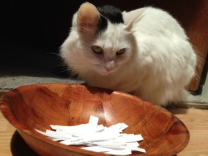 Charlotte frowns sternly at 2014 NAPIBOWRIWEE participants trying to bribe her with tuna...