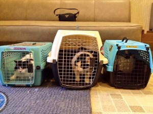 L-R: Beethoven, Oreo and Charlotte at the vet today. They are most displeased. Thankfully their unhappiness inspired my book idea for Day 5. :)